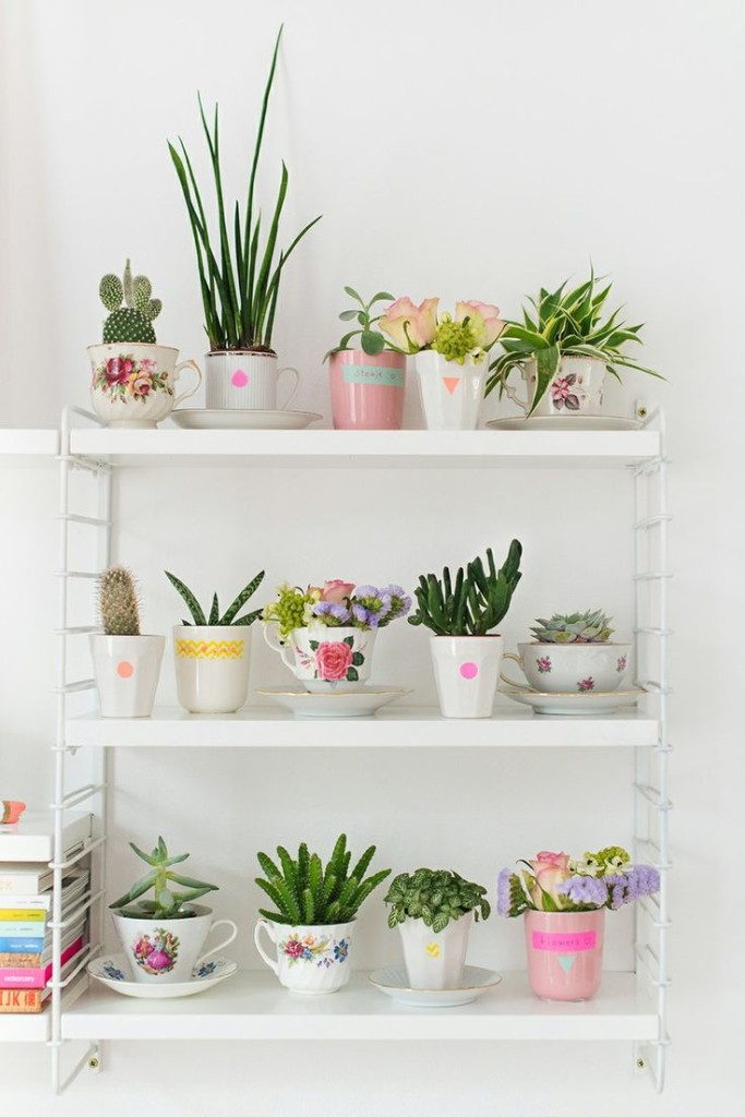5. Teacup plants