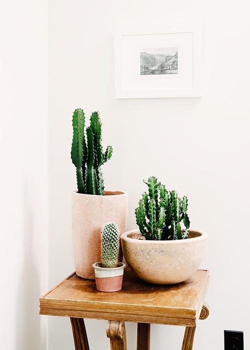 4. Cacti