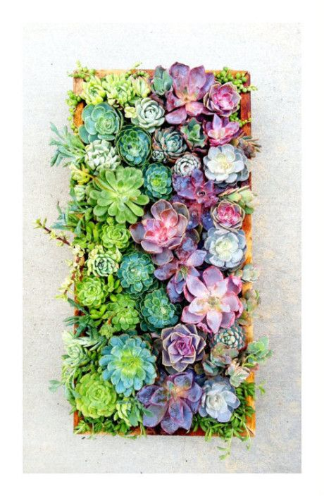 6. Gorgeous Succulents!